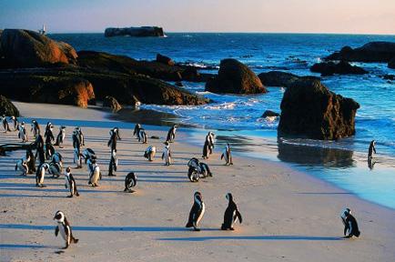 colonia de pinguini africa de sud