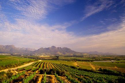 simonsberg-drumul-vinului